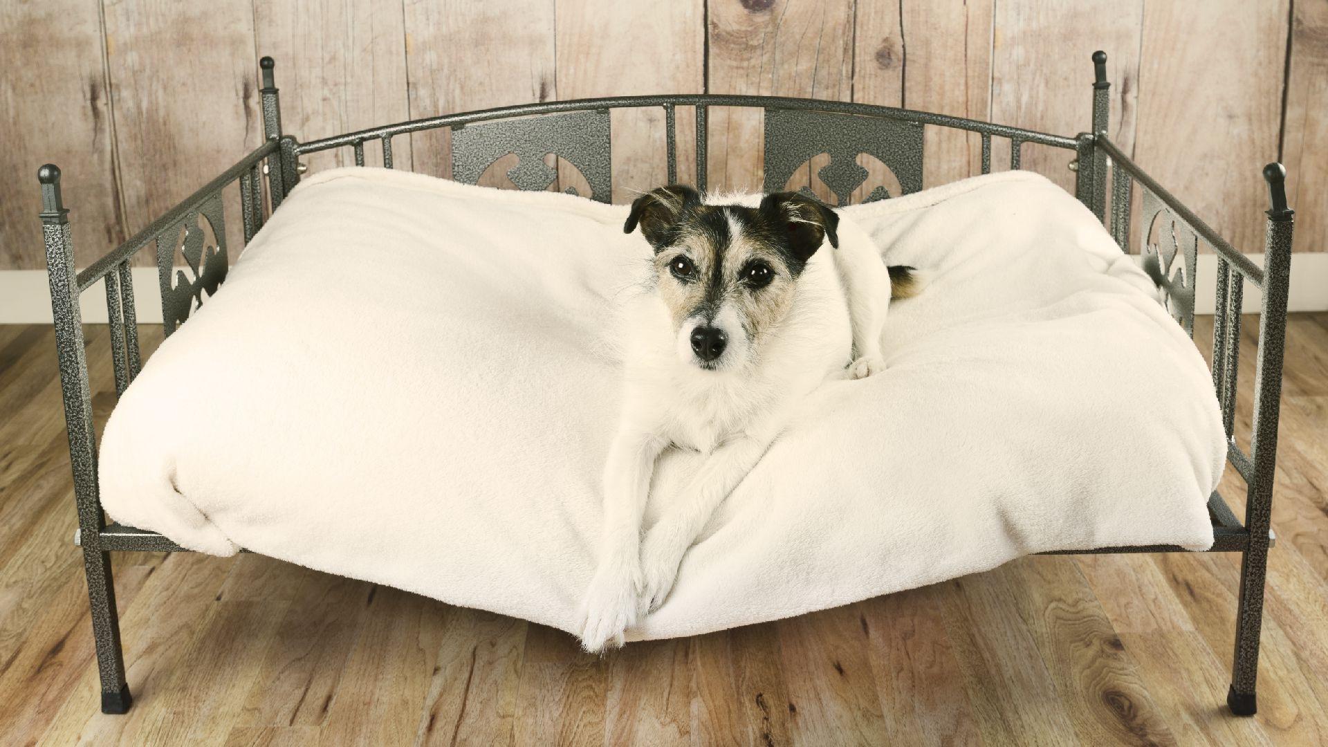Dog Beds at Greens of Mendip