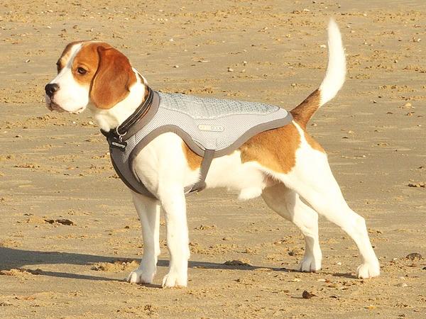 ClimaCOOL, Dog Cooling Jacket (Vest)