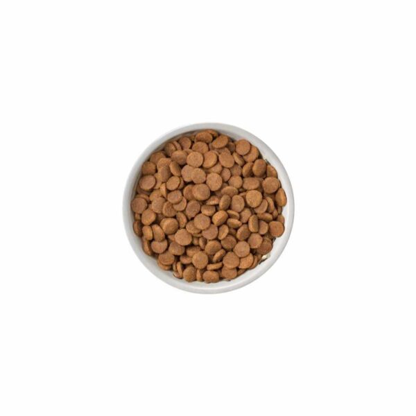 nature's variety free range chicken for puppies kibble